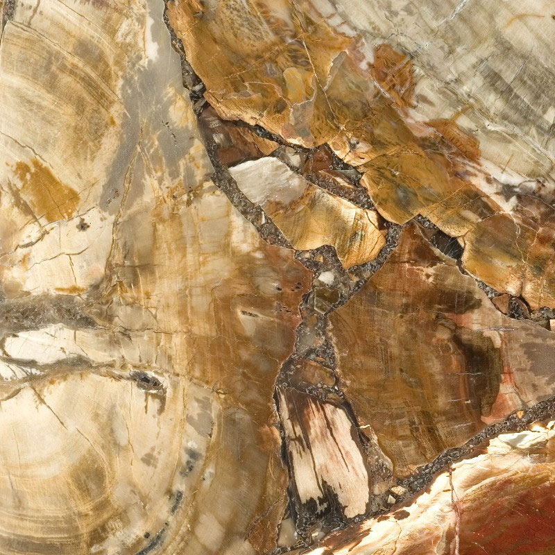 Petrified Wood 8330